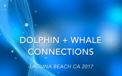 Meditation: Dolphin & Whale Journey, Laguna Beach CA